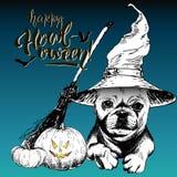 Поздравительная открытка вектора на хеллоуин Собака нося шляпу ведьмы Фонарики веника и тыквы вычерченная рука Стоковое Изображение RF