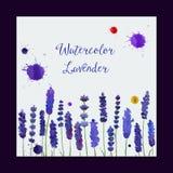 Поздравительная открытка вектора с лавандой акварели Стоковые Фото