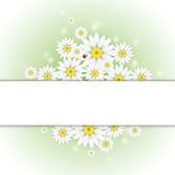 Поздравительная открытка маргаритки Стоковое фото RF