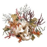 Поздравительная открытка морской жизни акварели затрапезная с иллюстрация вектора