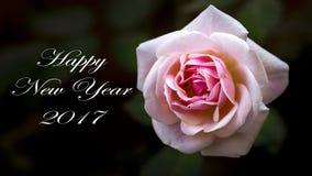 Поздравительная открытка Нового Года подняла Стоковое Изображение RF