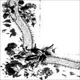 Поздравительная открытка приглашения или 8 шаблонов с предпосылкой ленты ткани шнурка Стоковые Изображения RF