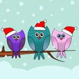 Поздравительная открытка рождества с сычами Стоковая Фотография RF
