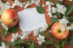 Поздравительная открытка с ветвями цветения яблока на оранжевом backgr Стоковое Фото