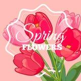 Поздравительная открытка с зацветая цветками тюльпана также вектор иллюстрации притяжки corel Стоковое Изображение RF