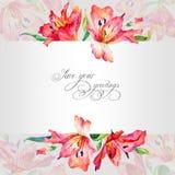 Поздравительная открытка с красными лилиями акварели Стоковое Изображение