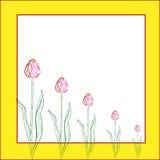 Поздравительная открытка с тюльпанами Бесплатная Иллюстрация
