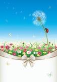Поздравительная открытка с цветками и одуванчиком Стоковые Изображения RF