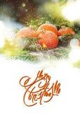 Поздравительная открытка с Tangerines как игрушка ели и ветвь спруса на белом снеге Стоковые Фото