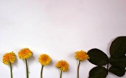 Поздравительная открытка, цветки, предпосылка Стоковые Изображения RF