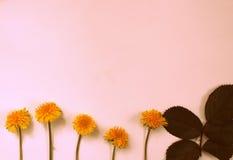 Поздравительная открытка, цветки, предпосылка Стоковые Фотографии RF