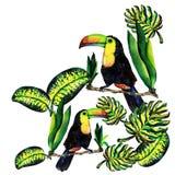 Поздравительная открытка monstera и Toucan листьев Иллюстрация штока
