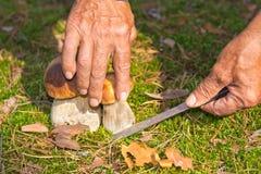 Поиск для грибов в древесинах Подборщик гриба, гриб Стоковая Фотография RF