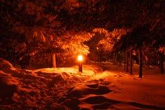 Поиск рождественской елки Стоковое Изображение RF