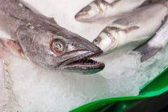 Покажите замороженных рыб для продажи на рынке, Ла Стоковая Фотография RF