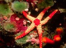 покажите звезду Стоковое Фото