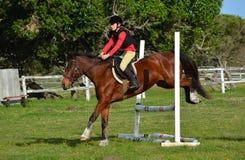 Покажите скача лошадь и всадника Стоковое Фото