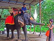 Покажите слона Стоковые Изображения