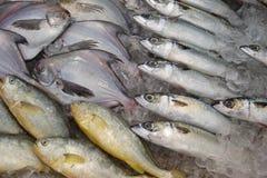показанный льдед рыб Стоковая Фотография RF