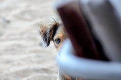 Покинутая бездомная собака смотрит прищурясь ринв стул на пляже Стоковое Фото
