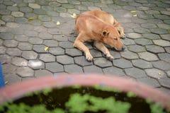Покинутая бездомная бездомная собака спать на улице Стоковая Фотография