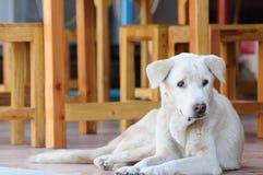 Покинутая бездомная бездомная собака заискивая на улице Стоковое Фото