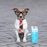 Покинутая и потерянная собака Стоковая Фотография RF