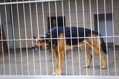 Покинутая собака в приюте для животных, унылая собака Стоковые Изображения RF