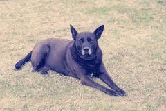 Покинутая собака с любознательным взглядом 2 стоковые фото
