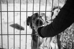 Покинутая собака унылая Стоковая Фотография