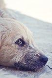 покинутая собака Стоковое Фото
