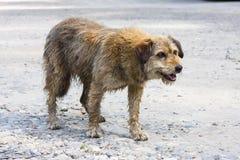 Покинутая собака Стоковые Фото