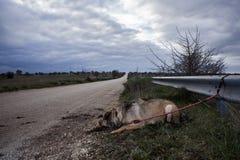 покинутая собака Стоковая Фотография RF