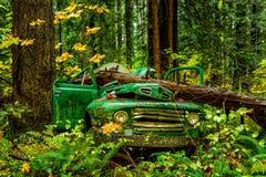 Покинутая старая тележка Форда в тропическом лесе, Британской Колумбии, ДО РОЖДЕСТВА ХРИСТОВА, Ca Стоковое Изображение