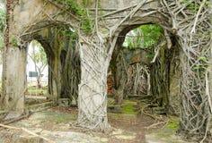 покинутая стена корней Стоковое Изображение