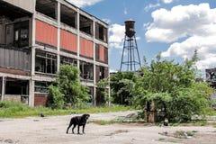 Покинутая фабрика 15 Packard стоковые фотографии rf