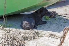Покинутая черная собака лежит в тени Стоковые Фото