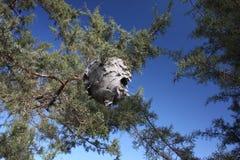 покинутое гнездй s шершня Стоковое Изображение
