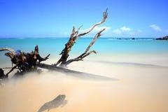 Покинутое дерево Стоковое Изображение RF