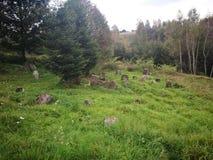 покинутое кладбище Художнический взгляд в цветах стоковое фото rf