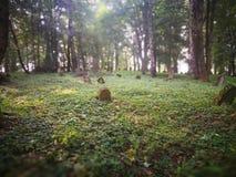 покинутое кладбище Художнический взгляд в цветах стоковое фото