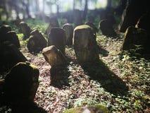покинутое кладбище Художнический взгляд в цветах стоковая фотография
