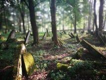 покинутое кладбище Художнический взгляд в цветах стоковые фотографии rf