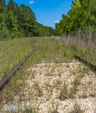 Покинутые железнодорожные пути в древесинах Стоковая Фотография