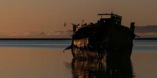 Покинутые корабль и чайки, Новая Зеландия Стоковая Фотография