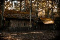 Покинутые дом и древесины стоковое фото rf