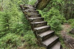 Покинутые остальнои конкретной лестницы в древесинах стоковые изображения