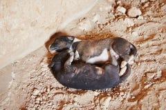Покинутые щенята Стоковое Фото