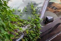 Покинутый автомобиль перерастанный с взбираясь заводами wildfire стоковое изображение