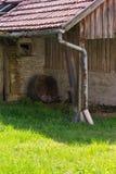 покинутый амбар на саде коттеджа в сельской сельской местности юга Стоковая Фотография